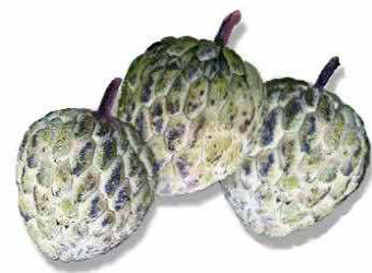 Picture of Atis Fruit aka: Sweet Sop & Sugar Apple