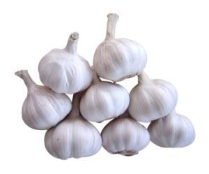 Herbal Medicine Picture: Garlic / Bawang (Allium Sativum)