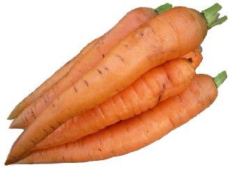 Carrot (Daucus carota L.)