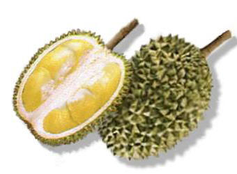 Durian Fruit Picture
