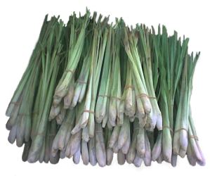 Tanglad or Lemon Grass