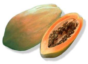 نبات البابايا Papaya