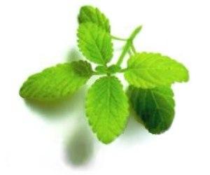 herbal medicine plants